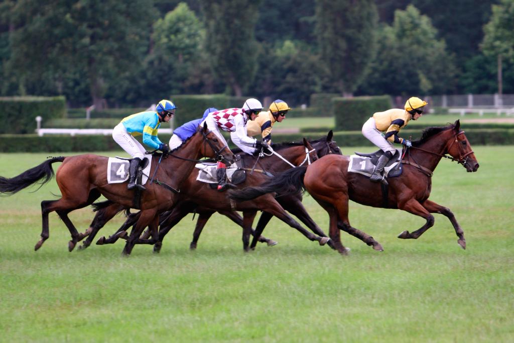 Можно ли беременным кататься на лошадях Советы и рекомендации
